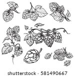 hand drawn engraving style hops ... | Shutterstock .eps vector #581490667