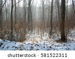 cold winter in the woods  | Shutterstock . vector #581522311