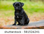 portrait shot of my puggy | Shutterstock . vector #581526241