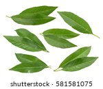 peach leaves isolated on white...   Shutterstock . vector #581581075