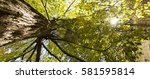looking up at a large tree with ... | Shutterstock . vector #581595814