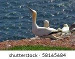 helgoland   german island | Shutterstock . vector #58165684