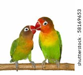 Kiss Lovebird Isolated On Whit...