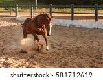 Horse Running In The Enclosure