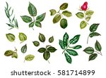 green watercolor leaves. linden ... | Shutterstock . vector #581714899