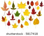 many colorful autumn leaves | Shutterstock . vector #5817418