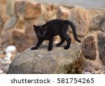 Stock photo black kitten 581754265