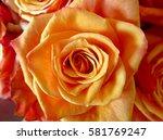 Close Up Of Fresh Orange Rose...