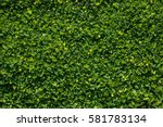 lush foliage tiny | Shutterstock . vector #581783134
