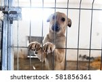 behind the bars in a stray dogs ... | Shutterstock . vector #581856361