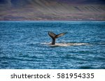 tail of a whale in husavik ... | Shutterstock . vector #581954335