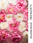 beautiful flowers of white and... | Shutterstock . vector #581962471