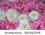 beautiful flowers of white and... | Shutterstock . vector #581962549