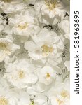beautiful flowers of white and... | Shutterstock . vector #581963695