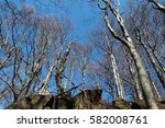 group of deciduous trees under... | Shutterstock . vector #582008761