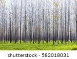 forestation of the forest in... | Shutterstock . vector #582018031
