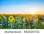 evening a field of blooming... | Shutterstock . vector #582020731