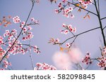wild himalayan cherry with blue ... | Shutterstock . vector #582098845