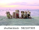Small photo of Dogs on the Beach
