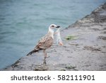 big seagull with plastic bag on ... | Shutterstock . vector #582111901