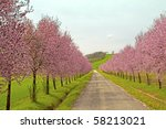 Road Coasted By Peach Trees...