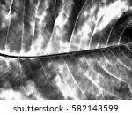 Black And White Leaf Background