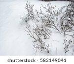 Frost Snow Covered Bush Stem O...