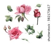 flowers and leaves  watercolor  ... | Shutterstock . vector #582173617