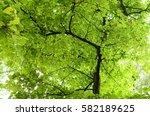 green foliage | Shutterstock . vector #582189625