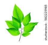 isolated fresh green leaves.... | Shutterstock .eps vector #582225985