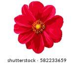 Stock vector flower 582233659