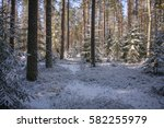 In The Winter Forest After A...