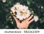 natural texture | Shutterstock . vector #582262309
