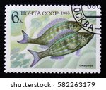 Small photo of MOSCOW, RUSSIA - FEBRUARY 12, 2017: post stamp printed in USSR (CCCP, soviet union) shows Perciformes (Percomorphi, Acanthopteri) from food fish series, blue yellow brown, circa 1983