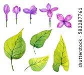 watercolor pink lilac petals. | Shutterstock . vector #582287761