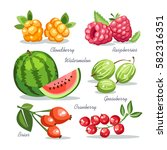 fresh fruits collection... | Shutterstock .eps vector #582316351