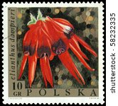 Small photo of POLAND - CIRCA 1967: a stamp printed in Poland shows flower Clianthus dampitri, circa 1967