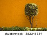 Sculpted Ficus Tree Isolated...
