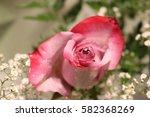 valentine's day roses   Shutterstock . vector #582368269