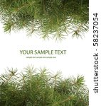 green spruce branch on white... | Shutterstock . vector #58237054