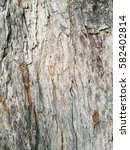 Small photo of Tree tunk texture background.
