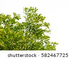 green leaves isolated on white... | Shutterstock . vector #582467725