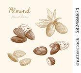 almond. hand drawn sketch   | Shutterstock .eps vector #582486871