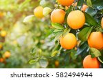 orange garden | Shutterstock . vector #582494944