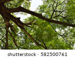tree branches and green leaves... | Shutterstock . vector #582500761