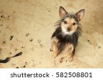 cute little dog with dirty... | Shutterstock . vector #582508801