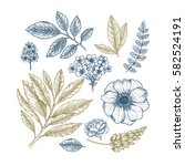 hand drawn herb and flower set. ... | Shutterstock .eps vector #582524191