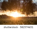 Grass In Sunset Light Over...