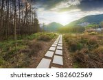 forest road | Shutterstock . vector #582602569