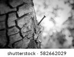 Rusty Nail On Tree Trunk For...